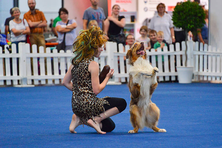 Agility World Dog Show
